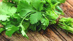 Một số bài thuốc dân gian chữa bệnh cảm từ rau mùi