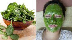 2 cách làm đẹp da bằng rau mồng tơi đơn giản tại nhà