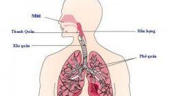 Viêm đường hô hấp trên: Nguyên nhân, triệu chứng, chẩn đoán và điều trị